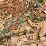 composting browns, leaves, pine needles and sticks